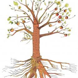 arbre ennea